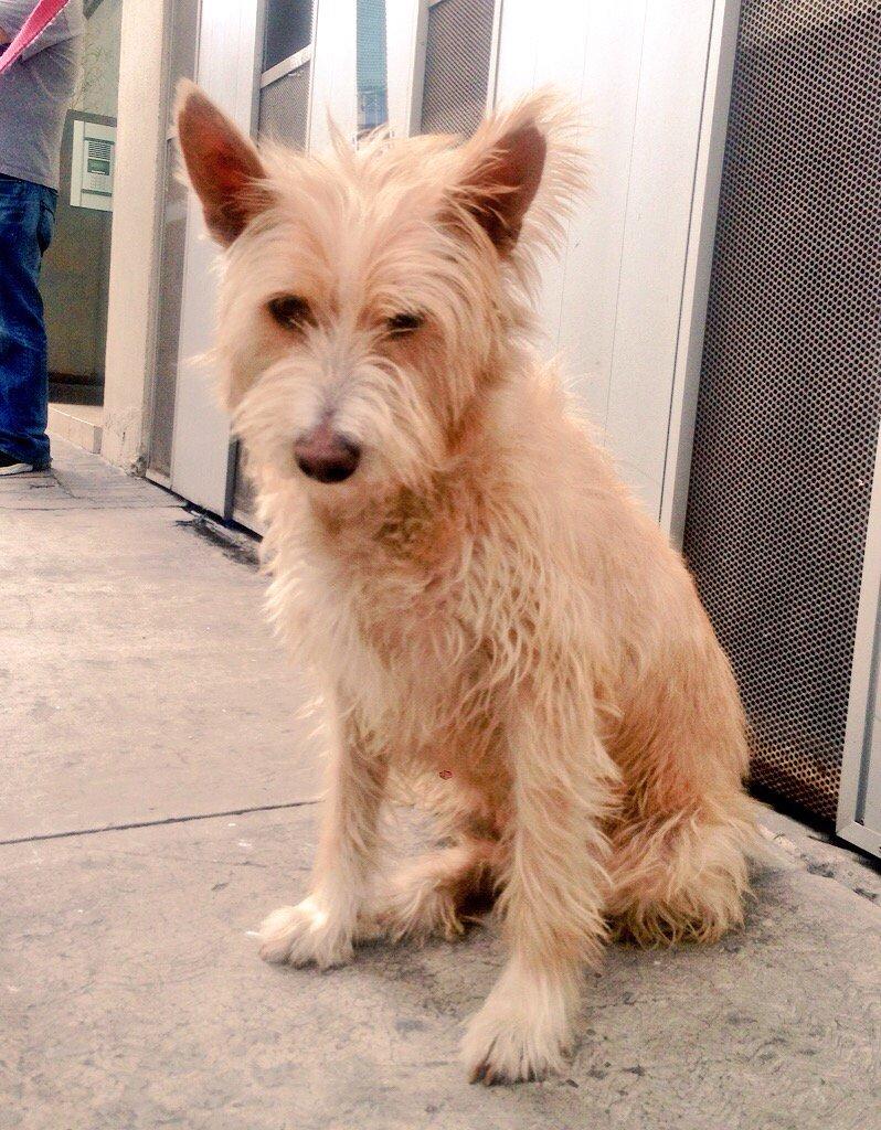 Tina en adopción. Vacunada/esterilizada. Sale al baño. Amigable c/ perros y gatos Informes en medville_8@hotmail.com https://t.co/NPMxMPsNI3