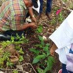 En Darién nuestro personal dijo presente para apoyar el gran Día de la Reforestación #ReforestaPanamá https://t.co/yJRVB1AkUI