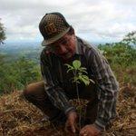 #ReforestaPanamá: Autoridades y personalidades participaron en la jornada de reforestación. https://t.co/Y5WY923XzU https://t.co/L7ntygtQWW