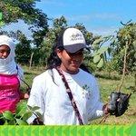 Estudiantes a nivel nacional plantaron árboles frutales como el de Guaba y el Marañón Curazao #ReforestaPanamá https://t.co/A6CaDCP3PZ