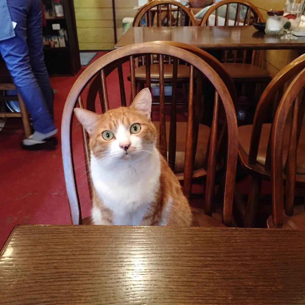向かいの席に猫さまが座ってくれる喫茶店がありました