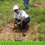 Contribuimos con la siembra de 2,400 plantones en 6 hectáreas en El Silencio y Wekson-Changuinola #ReforestaPanamá https://t.co/aPFMTJC6GH