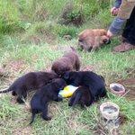 Urgente #doglovers!!! Necesitamos adopción urgente en Maitencillo!!! DM!!! https://t.co/frCrBBWG9I