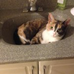 Evelines missing! Last seen Aug 26 Camm Cr & Periwinkle Way #guelph. Has right ear tattoo https://t.co/BhpaTLnZqG https://t.co/p9VljGQxI4