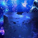 【神秘的な空間】えのすい、「ナイトワンダーアクアリウム」パート2が9月13日スタート https://t.co/wN4JsYg9Bn 『そして、あなたは魚になる』では、夜の海底で、相模湾を泳いでいるかのような体験が楽しめます。 https://t.co/WOhxyQrMmw