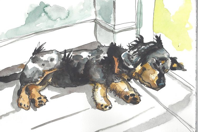 I paint dogs for £70 a go. https://t.co/1hZcVvDybK Look at this one! Let me buy food. https://t.co/VvVXxlHFWG