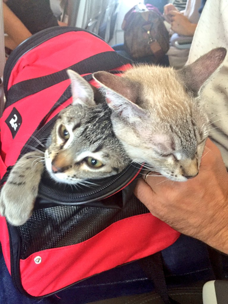 OMG I just won the airplane seatmate lottery today! How lucky am I? I won't mind if they sit too close #crazycatlady https://t.co/7LWtOzzbnJ