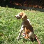 Tritón perro de 3 años en #adopcion en #Madrid https://t.co/EaLoGTI5Iw