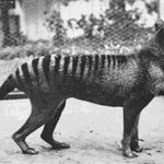 mashable : The sad story of the last Tasmanian tigers https://t.co/STQlh5OWMi https://t.co/p6tT3fE2Jp (via Twitte… https://t.co/uwOdeqKyZu