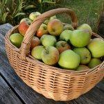 Wer mag Äpfel? Hab zuviel und noch drei Bäume voll. #Leipzig ... Ist ernst gemeint. Gebe gerne ab. https://t.co/DIM9ewS3Wr