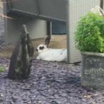 #found #rabbit posted on #hull blues and twos Facebook Barham Road close to Andrew marvel. https://t.co/9aurpkFuCW
