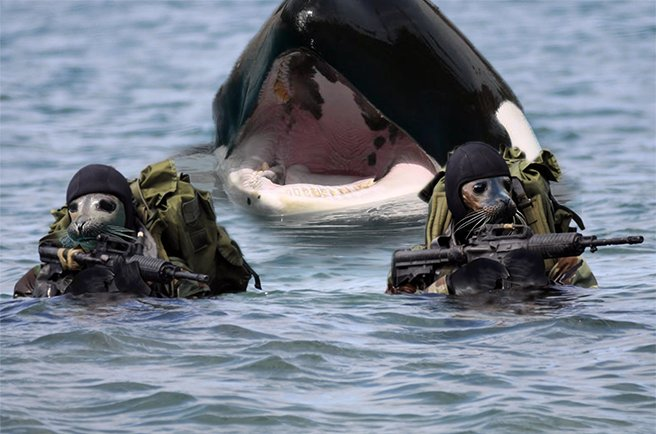 Our navy SEALS are the Real Deal. #ThingsIdLikeToStealFromCanada  cc @butch715 https://t.co/siNEmg7OG2