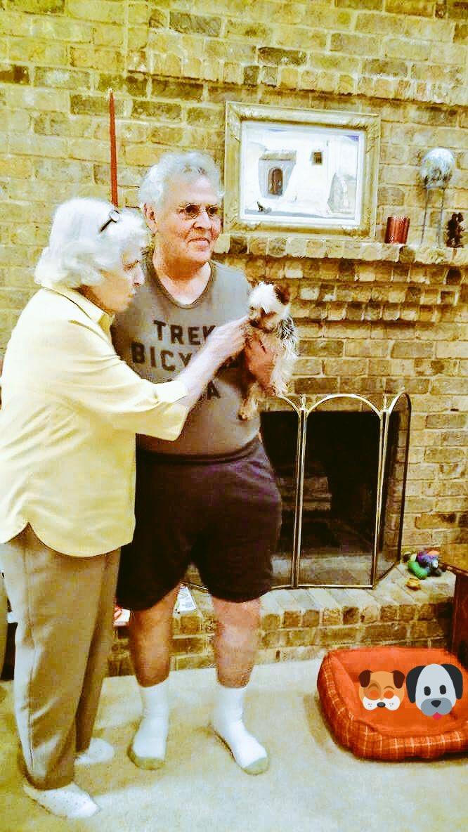 Taz home!  @BeboBuckley @Texaswritergirl @BettyBuckley #AdoptDontShop #rescuedogs #lovedogs #littledogrescue #dogs https://t.co/RXtaB23ApQ
