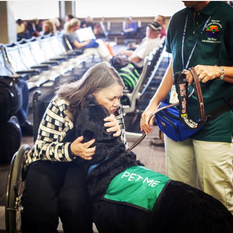 Traveling through SAN today or tomorrow? ReadyPetGo! therapy dogs will be in the terminals: