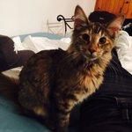 Mi madre tiene un nuevo gato y es tan mono que me quiero morir https://t.co/hnr5ecLtqH
