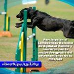 #Barquisimeto Concursa por el premio #TestigoAgility de la Copa Agility Guaros 2016 https://t.co/wFrc8Lrwok https://t.co/mlqCLuj5iy