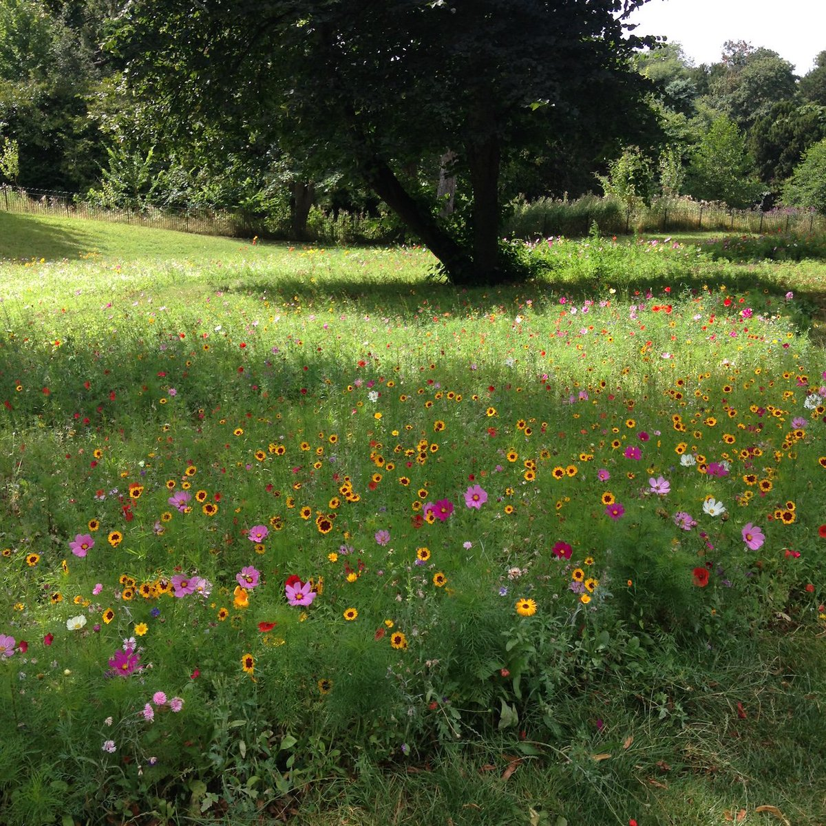 A cheering sight: the wild flowers that have recently sprung up in the grounds of @Chiswick_House https://t.co/yLB4QXjBtj