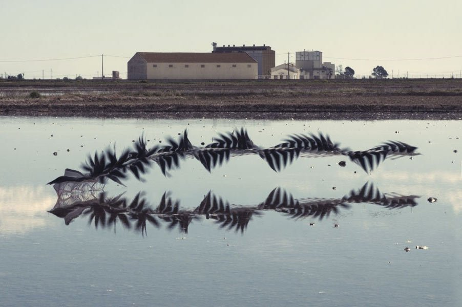 """Can't stop browsing """"Ornitographies"""": time-stitched photos of birds' flight paths, beautiful https://t.co/S0zCDvNVhM https://t.co/i7XwserayQ"""
