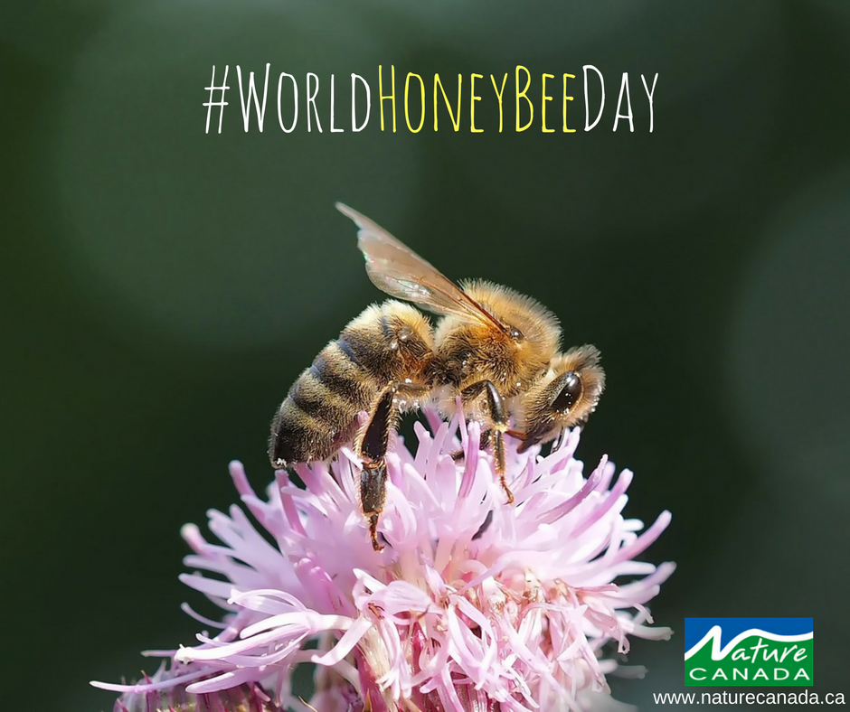 A Honeybee visits anywhere from 50 to 100 flowers during a one collection trip! #WorldHoneyBeeDay https://t.co/zKS3jD7JHK