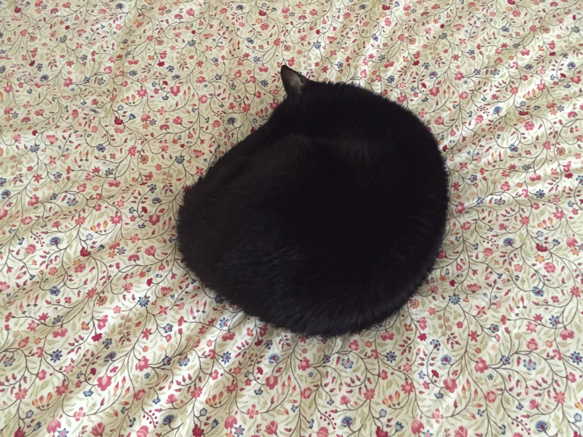 A black hole warps both time and space. Here, let my cat demonstrate. https://t.co/3VTtmp3Xvl