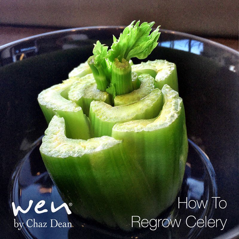 Place the base of celery in the bowl with water and watch new stalks grow!