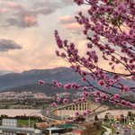 """greg_faull: """"Spring is in the air"""" A beautiful sunrise over the Tasman Bridge, with spring blossom, by lifecatchme… https://t.co/lcswd8syQs"""