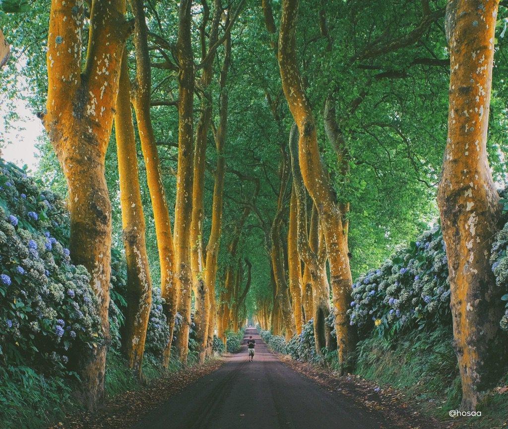 طريق إلى الفردوس ! الصدفة قادتني لهذا الممر الساحر في جزر الأزور كاميرتي لم ولن تستوعب الألوان وشعور المكان أبداً ! https://t.co/iwL95S89eE