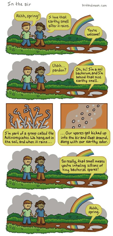 What petrichor actually is https://t.co/y2weiUuBEx