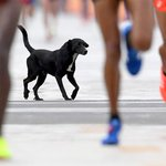 Jordanian runner beaten by stray dog in Rio