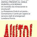 🚫🚫🚫 TROVATA IN RETE QUESTA RICHIESTA DI AIUTO🚫🚫🚫 #CANILE MURATELLA DI #ROMA 👇👇👇😥😥😥🚨🚨🚨🚨 https://t.co/Eg613Budj9