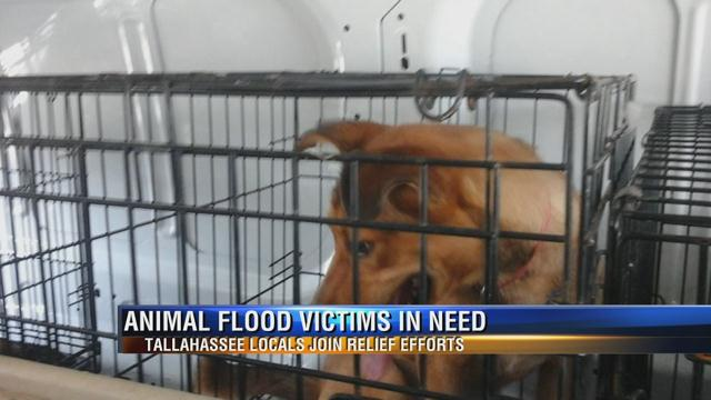 ANIMALS IN NEED OF HELP: Help out by adopting one of these furry flood victims (https://t.co/jI7J7rosxk) https://t.co/PDw8XqqAIK