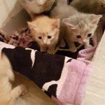 нашла самых мужественных котят,тихо лежали в мал.коробке. 3рыжих и 2серых комочков счастья нуждающихся в хозяине#рт https://t.co/cDVHkQnWl7