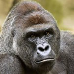 """Cincinnati Zoo deletes Twitter account after harassment — """"just like they deleted Harambe"""" https://t.co/iweApO2K8z https://t.co/yMJw67c8kB"""