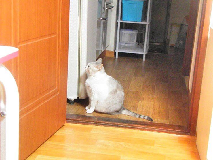 @shinmilla 무섭죠? 냉장고에 북어포 있으면 제가 보고있어도 대놓고 열어버림. 의자로 막아야함.ㅋㅋㅋ https://t.co/MlBV0E2lWd