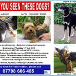 Pls RT TWO dogs still #missing from #London #SE27 from #stolen white #Fiat Doblo van https://t.co/5BUAugpnTE https://t.co/eYY7BHt2kA