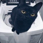 眼差しの愛らしさには定評のある黒猫です https://t.co/p6u1GUQAvN