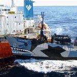 【シー・シェパード】「妨害永久に行わない」合意に抜け穴…拠点移し、高速新造船を投入 ワトソン容疑者「南極海に戻る」と豪語 https://t.co/e9Ze5sF0y6 https://t.co/R6mtqbx96d