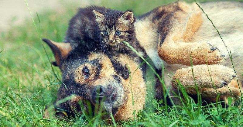 #AlerteCanicule : veillez à bien protéger vos #animaux de la #chaleur ! https://t.co/FWc7RUziRB https://t.co/vZXytaofAU
