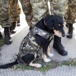 Little soldier. #army #Ukraine #cats #honey #war #dog #soldier #cat #freedom #pet #pets https://t.co/1NAw5LAvuy