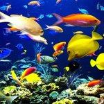 #ZoomarkInternational launches #AquaProject, #Bologna 11 to 14 May 2017 #Zoomark #aquarium https://t.co/3doBRadSIQ https://t.co/dxhu3O0ZQQ