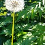 Heute im Botanischen Garten, Bonn. #botanischergarten #bonn #sommer https://t.co/vRQVF6fPHU https://t.co/S4j97JyfIr