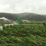 台風9号の影響で益子町のひまわり祭りが中止となりました。町HPより「※ひまわり祭りは台風9号被害により、会場設備、ひまわりともに復旧不可能のため中止とさせていただきます」 https://t.co/63BpgV4CBr(参) https://t.co/8nRtgKMWts