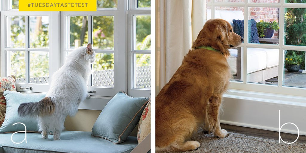 Which furry friend is your favorite? RETWEET for A or LIKE for B! #TuesdayTasteTest https://t.co/0kYvHTPdyU