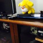 今日は静岡のテレビ局にお邪魔しています。ダイちゃん。 https://t.co/u8AilQIweW