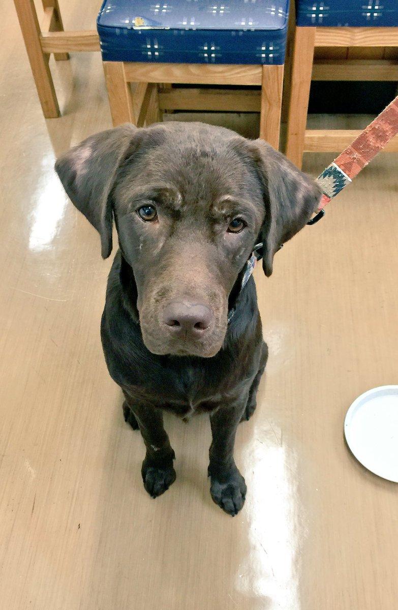 【迷子犬のお知らせ】ハッピーロード大山商店街で茶色のワンちゃんが迷子になってます。 商店街事務所で保護してますので、飼い主の方やご存知の方がいらっしゃいましたらご連絡お待ちしてます。 https://t.co/0sFEi7vs77