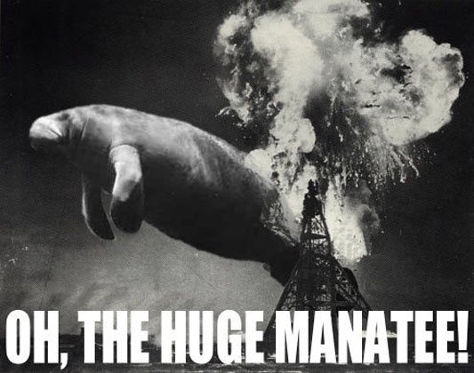 @BBCBreaking - Oh, the huge manatee! https://t.co/hWaHfcq2tg