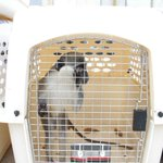 Israel helps evacuate animals as worlds worst zoo in Gaza closes https://t.co/drJMKHcjqn #MiddleEast https://t.co/yoxnXCi45S