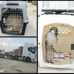 This morning, over 15 animals were transferred frm #Gaza zoo to receive proper conditions & care in #Israel & abroad https://t.co/USrtanVs7W