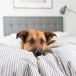 Find 37 #dogfriendly hotels in #Gloucestershire including @SlaughtersInn #Cotswolds. https://t.co/6ZvwFT26KS https://t.co/aMb1QYc8T9