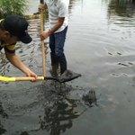 Medio ambiente trabaja en Av. Veracruz en destape de drenaje así como alcantarillas alrededor de la Laguna Lagartos. https://t.co/FflNAUWJVl